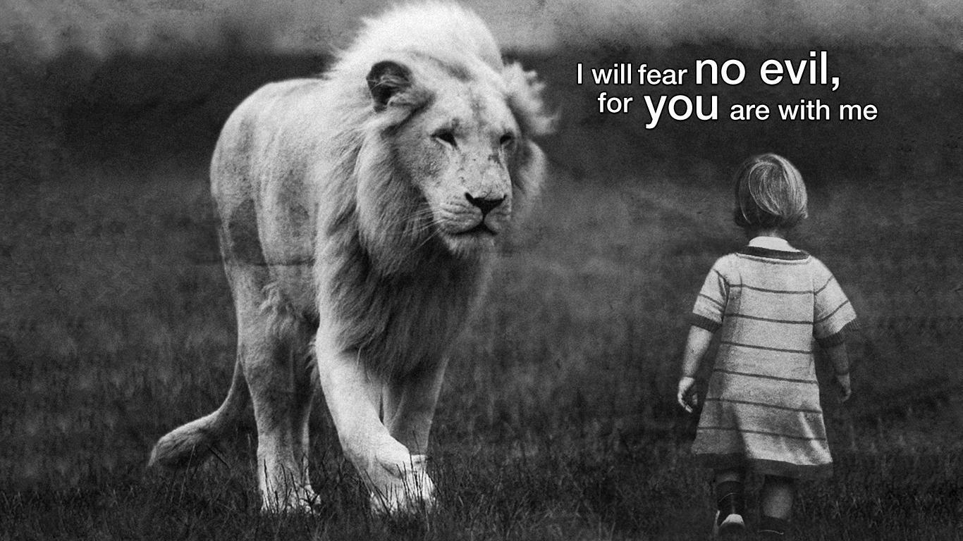 Fantastic Wallpaper Lion Facebook - lion-fear-no-evil-wallpaper_1366x768  You Should Have_94489.jpg