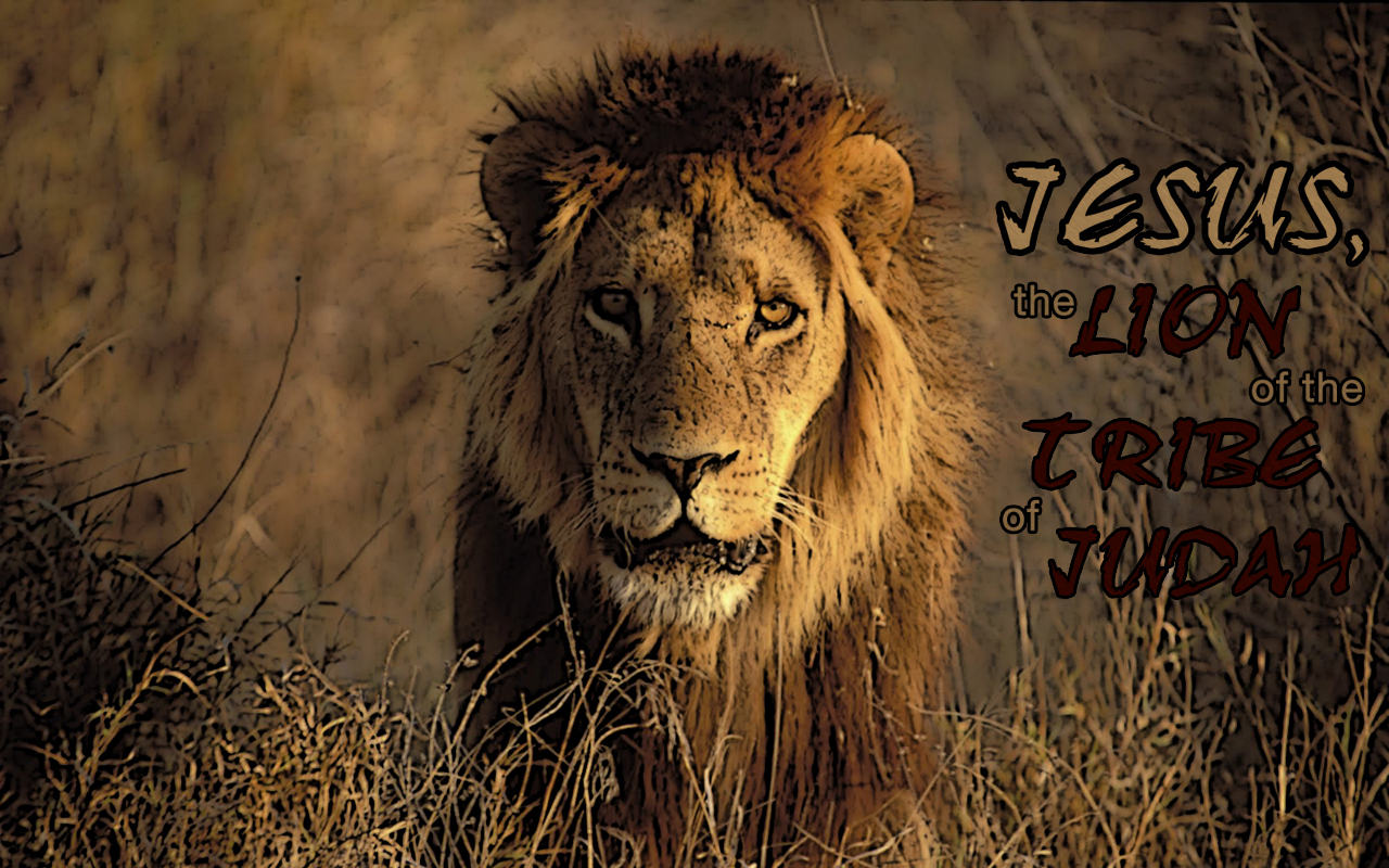Popular Wallpaper Lion Facebook - lion-tribe-judah-wallpaper_1280x800  Picture_99335.jpg