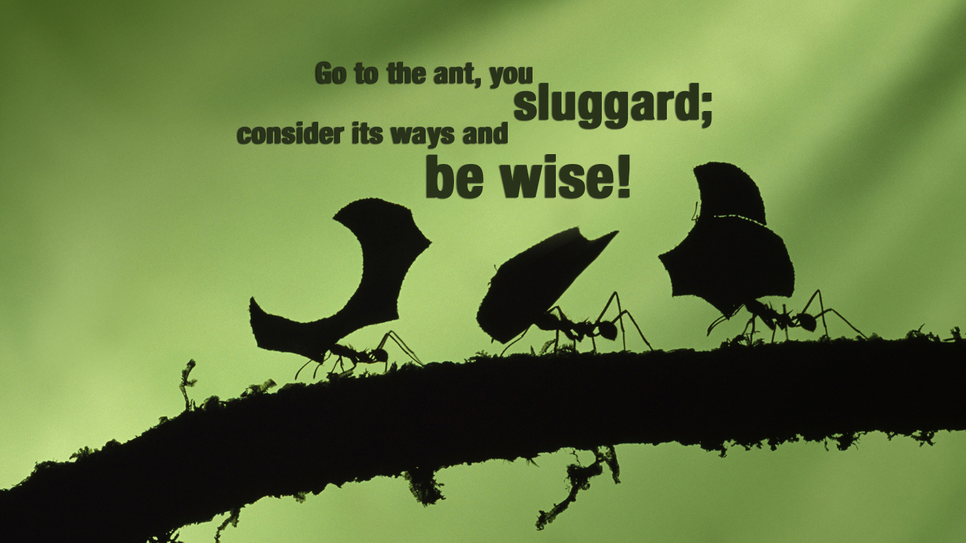 Picture Quotes For Facebook Cover Sluggard! | Christian ...