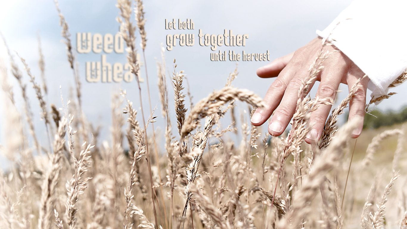 weed wheat let both grow together until harvest hand christian wallpaper hd_1366x768