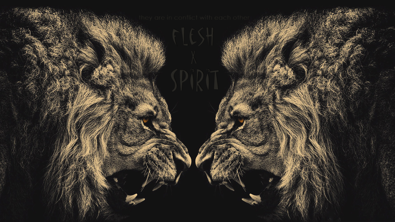 they are in conflict with each other flesh Spirit lions christian wallpaper hd_1366x768
