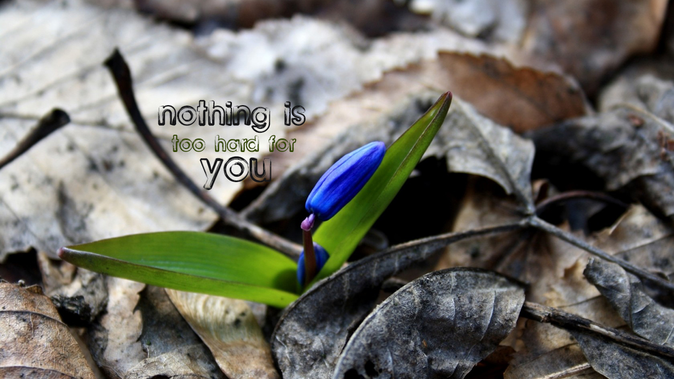 nothing is too hard for you flower christian wallpaper hd_1366x768