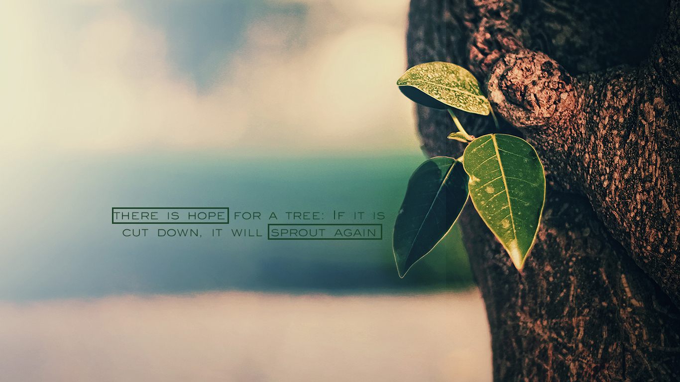 there is hope for a tree christian wallpaper hd_1366x768