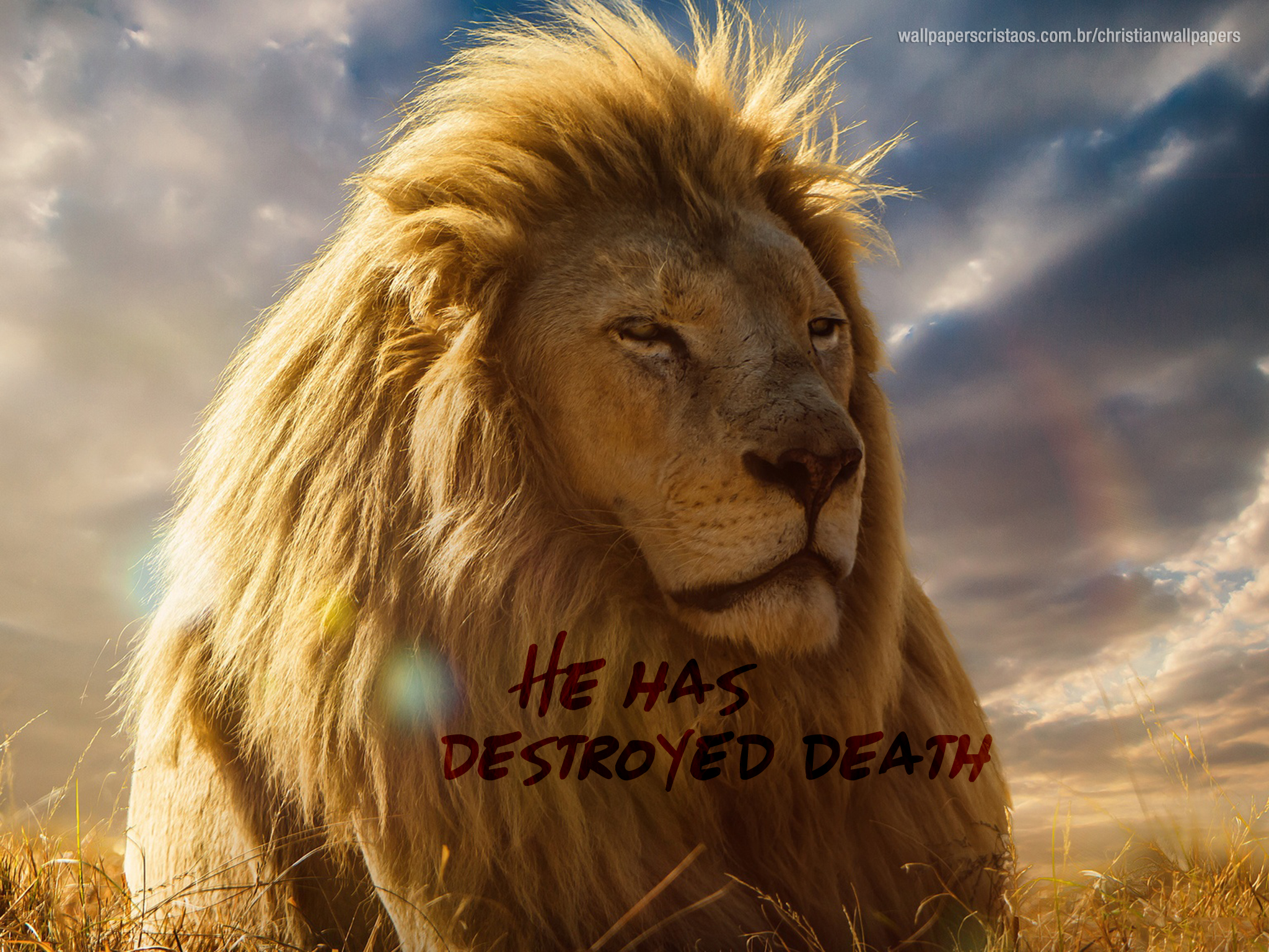Simple Wallpaper Lion Facebook - He-has-destroyed-death-lion-christian-wallpaper-hd_2048x1536  Perfect Image Reference_55370.jpg
