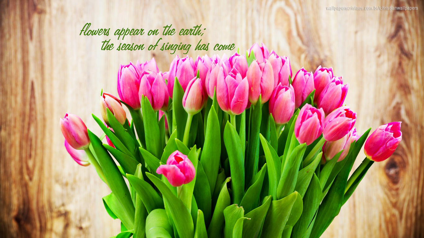 flowers appear on the earth the season of singing has come christian wallpapers_1366x768