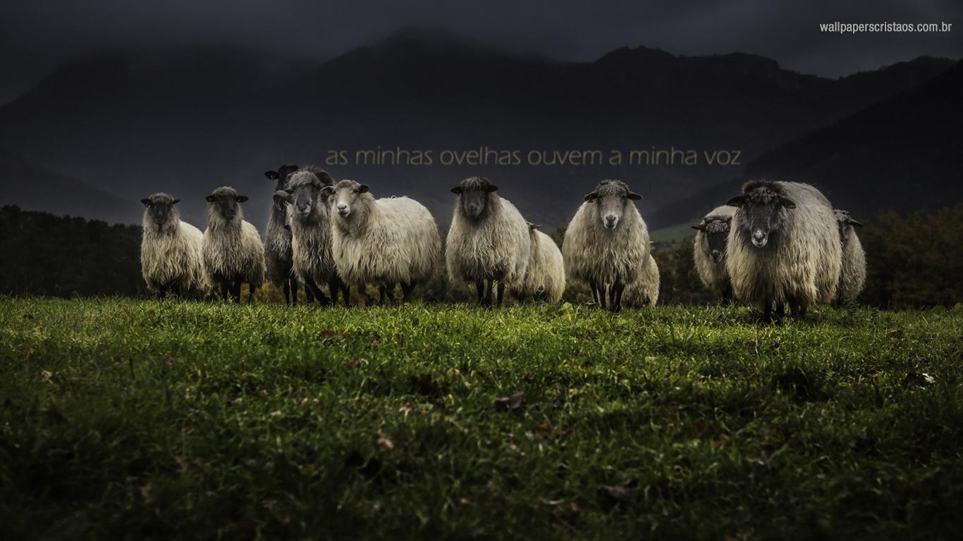 wallpaper cristao hd as minhas ovelhas ouvem minha voz_1366x768